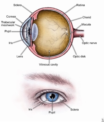 Ear Eye Nose and Throat Conditions