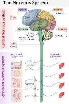Neurological Care